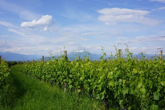 Wine Tasting In Lake Garda-Fattoria Colombara